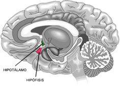 Mejora tu fibromialgia elevando tus niveles de serotonina