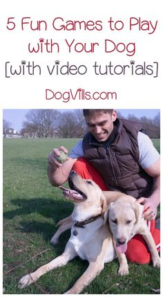 Looking for dog training tips that are actually fun to implement and help you bond with Fido? Try these five fun games for dogs!