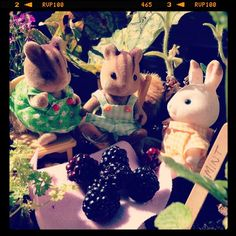 At the end of an exciting day in the Scottish countryside a #sylvaniansummer snack of freshly picked brambles is just what's needed! Yum!