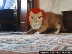 Evolution of the Thundercats