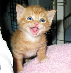 Smiling Cat Photos To Turn Your Frown Upside Down -  #cats #cute #kittens #smile