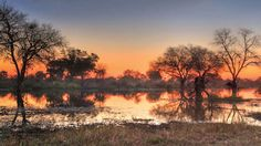 Exploring Botswana's wildlife by air, land and water: Travel Weekly