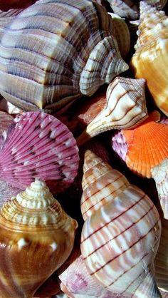 Pretty seashells