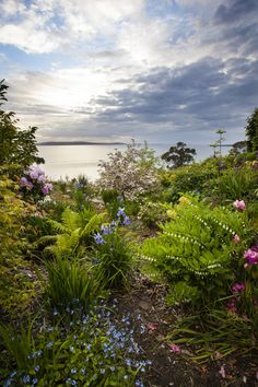 International Garden Photographer Of The Year 2013: Dennis Frates Wins With 'Penstemon Sunrise'