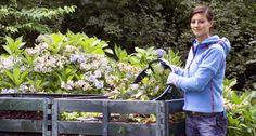 Kranke Pflanzen kompostieren?