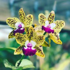 A little jaunt through the yard before head to #philly for five days. #orchid #orchidlover #flower #flowers #garden #mygarden #inbloom #bloom #pretty #gorgeous #flowerstagram #nature #picoftheday #rainbowsendgarden #florida #southflorida #floridalife #gardening #gardenlife #life #enjoy #love #thankful #photography #orchids #photoshoot #joy