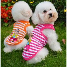 Compare Prices on Dogs Bichon Frise- Online Shopping/Buy Low Price ...