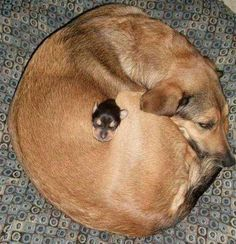 Love Cute Animals shares pics of playful animals, cute baby animals, dogs that stay cute, cute cats and kittens and funny animal images. Cute Puppies, Cute Dogs, Dogs And Puppies, Funny Dogs, Funny Kittens, Funny Humor, Funny Stuff, Baby Animals, Funny Animals