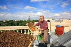 Beekeeper in Paris
