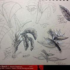 Dynamic Sketching 1