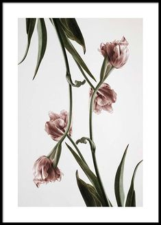 Pink Tulipe Poster in the group Posters Prints at Desenio AB 2120 Desenio Posters, Images Murales, Groups Poster, Foto Poster, Poster Poster, Modern Art Prints, Pictures To Paint, Art Auction, Botanical Prints