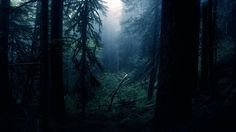 Find the best Dark Forest Wallpaper on GetWallpapers. We have background pictures for you! Tumblr Hipster, Tumblr Bff, Dark Wood Wallpaper, Forest Wallpaper, Nature Wallpaper, Amazing Wallpaper, Wallpaper Murals, Wallpaper Ideas, Photo Wallpaper