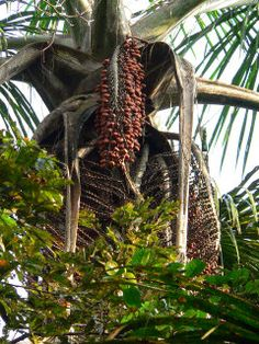 Pictures of trees, flowers and mushrooms of the amazon rainforest in Ecuador.