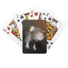 'Biff' dumbo rat playing cards