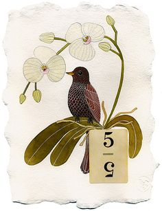 Perdido Art Journal: Geninne: Bird Illustration