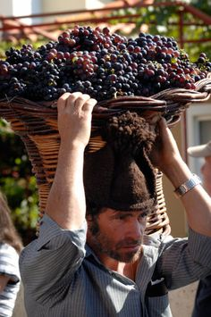 Madeira Wine Festival - harvesting the crop - wine making - grapes Funchal, Grapes And Cheese, Portugal, Wine Vineyards, Wine Cheese, In Vino Veritas, Wine Festival, Wine Time, Wine And Spirits