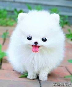 13 Cute Animal Pics – Monday June 17, 2013 | 7 | Socialite Life