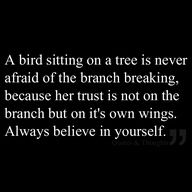 a bird sitting on a branch is never afraid - Google Search