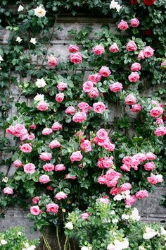 If only I could get them to look like this..I either do very well with roses or terrible!  I can't find a happy medium! lol
