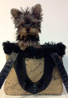 adorable...KiKi Hamann bag
