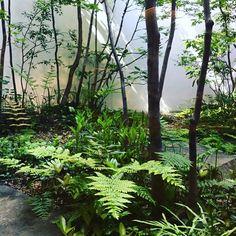 #雑木の庭 #京都旅ずっと憧れている造園家の荻野寿也さんが手掛けられた庭を愛でて参りました。#新緑#ホテルの中庭#京都#雑木|滋賀・東近江|造園・エクステリア|メデルガーデン Green Garden, Shade Plants, Plant Design, Landscape Architecture, Backyard Landscaping, Outdoor Living, Environment, Home And Garden, Japan