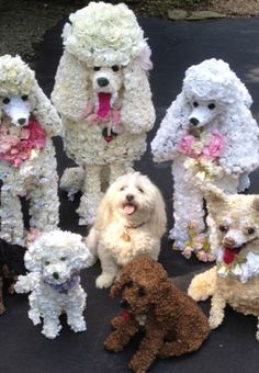 Flower Poodles - adorable! Looks like they snuck a real dog in there!