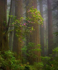 Marc Adamus - Life in the Trees