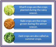 Class 8 CBSE Science Crop Production and Management Agriculture - Wiki