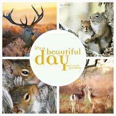 It's a beautiful day. #moodboard #mosaic #collage #byJeetje♡