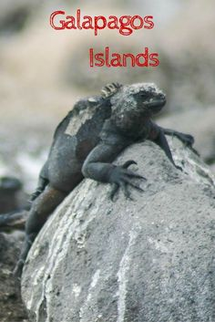 One for the bucket list, the Galapagos Islands are chock full of animals, beaches, and fun. Who could ask for more? Living on a boat, swimming, hiking, and communing with nature. Ecuador's world heritage site has it all. Click through to see some amazing wildlife photos. ~ReflectionsEnroute