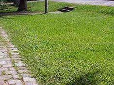 Axonopus compressus - Grama São Carlos, Grama-curitibana, Grama-missioneira, Grama-sempre-verde, Grama-tapete - apresenta tom verde mais claro, folhas mais largas, nos leva a aparar o gramado mais frequentemente. Altura de corte entre 2,5 a 5 cm, resistente a pisoteio e seca mas não à sombra.