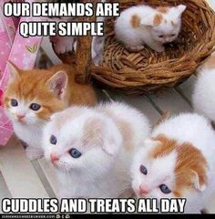 omg, can't handle the furrycute!