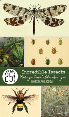 New Remodelaholic Contributor Post Incredible Insects The - New Remodelaholic Contributor Post Incredible Insects August By Brynne Comments Last Month For My Vintage Images Roundup Over On Remodelaholic I Shared A Collection Of Over Gorgeous But Printable Art, Free Printables, Printable Vintage, Printable Stencils, Vintage Prints, Vintage Posters, Foto Transfer, Nature Journal, Vintage Ephemera