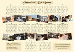 Chat Web, Cat Calendar, Fiction, Photo Wall, Cats, Photograph, Gatos, Cat, Kitty