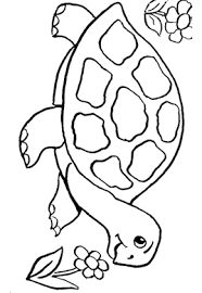 """Résultat de recherche d'images pour """"dessins de tortues"""""""