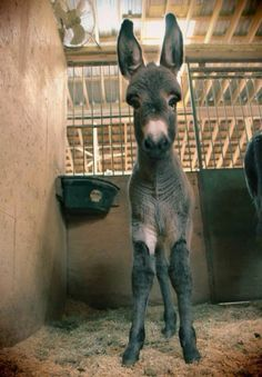 So Alert this donkey is...