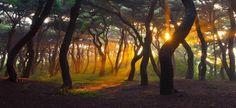 Forest by Chigun Nam