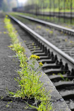 Green rail by Adorján Gábor