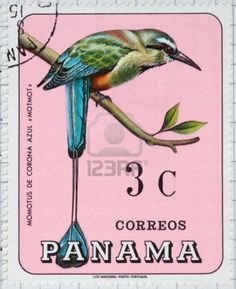 postage -- I saw this bird in the Cerrado forrest with Alexine in Brazil