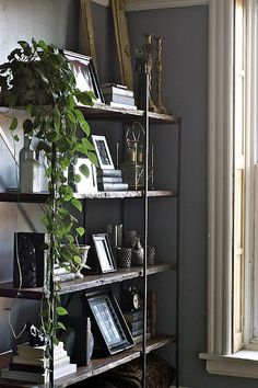 plant and bookcase