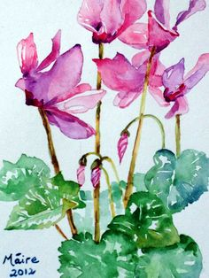Cyclamen Watercolour | My paintings