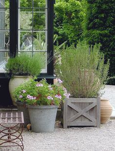 Vignette of potted grouping