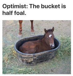 Funny Horse Memes, 9gag Funny, Funny Jokes, Horse Humor, Funny Commercials, Funny Minion, Funny Pranks, My Horse, Horse Girl