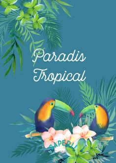 Le thème tropicool de la box papeterie de Saperlipapier ! Toucans, monstera, exotique Paradis Tropical, Toucan, Summertime, Movie Posters, Painting, Art, Exotic, Paper Mill, Gift Ideas