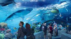 Ripley's Aquarium of Canada.  Opening in 2013