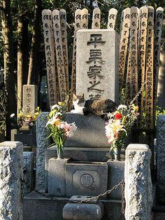 Cat resting on a Tombstone Zoshigaya Cemetery, Tokyo in Japan: The cat clearly misses his or her owner so much that he or she brings the owner flowers then rests upon the owners grave daily. What a devoted cat.