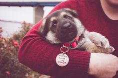 Awww! This puppy proposal is so adorable, I can't even.