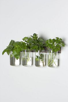 Lovely: A wall-mounted vase Inspired by Shaker craftsmanship. A row of four hand-blown glass vessels are suspended from a steel wall mount, created by SkLO Indoor Garden, Indoor Plants, Home And Garden, Herb Garden, Indoor Herbs, Green Garden, Green Plants, Garden Beds, Ikebana