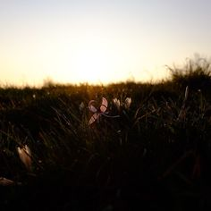 #fiore #flower #italia #italy #mountain #montagna #sole #sun #trekking#hiking #walking #camminare #camminata #fujifilm #fujifilmxt10 #fujifeed #sunset #tramonto #xt10crew #primavera #spring #brescia #natura #nature by niclaelena