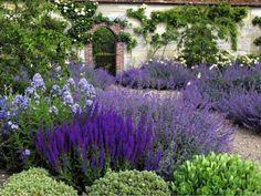 Beds of Nepeta Six Hills Giant, Campanula lactiflora Pritchard's Variety, valerian, Salvia x sylvestris Mainacht, hebe.